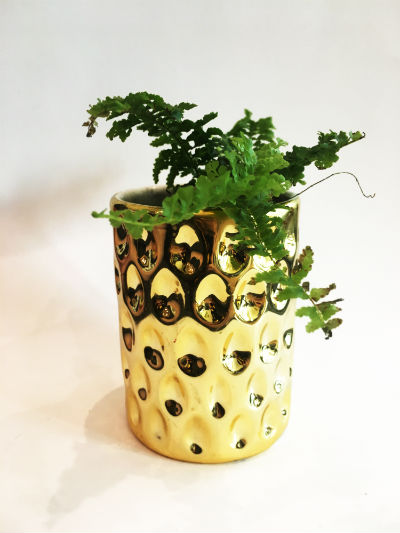 reused candle jar planter