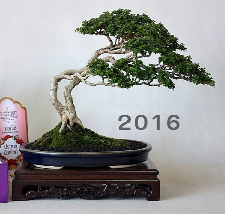 growth rate of bonsai