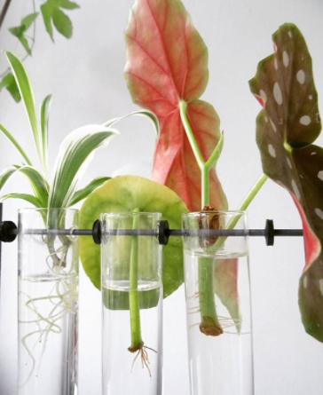 water propagation in test tubes