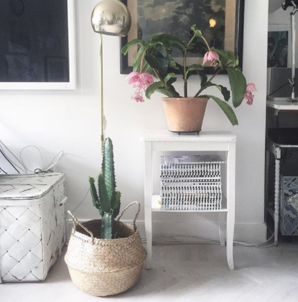 indoor plant inspiration