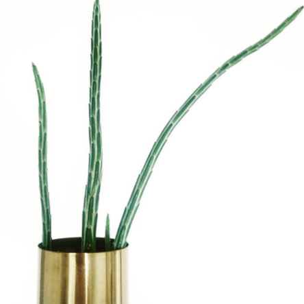 minimalist plant