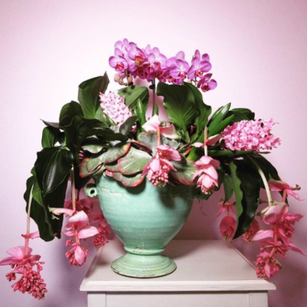 medinilla magnifica and orchid arrangement