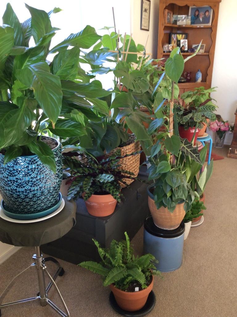 #plantfamily