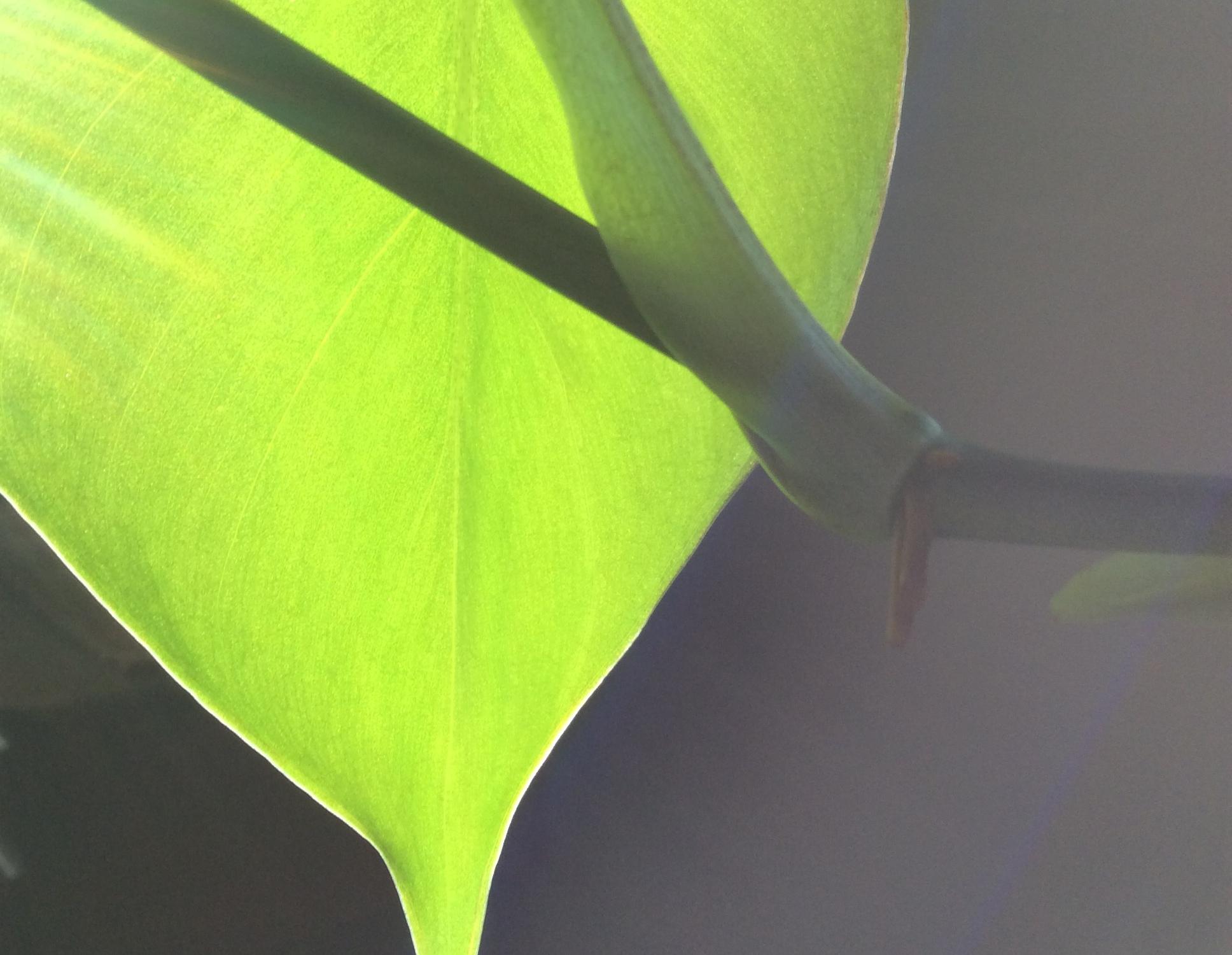 plant photography