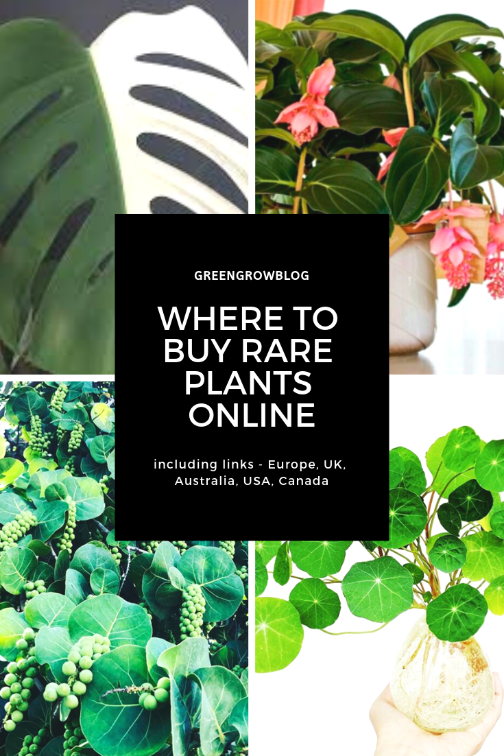 secret sources to buy rare plants online - uk, usa, canada, europe, australia