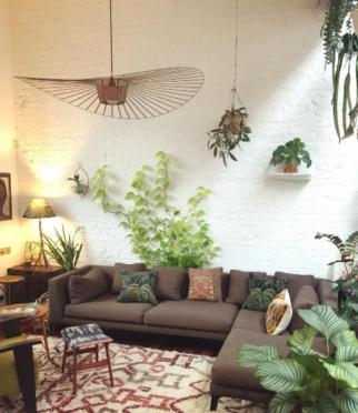 indoor climbing vine