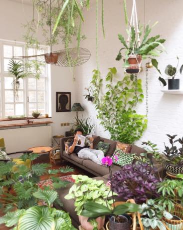 indoor jungle with neon pothos