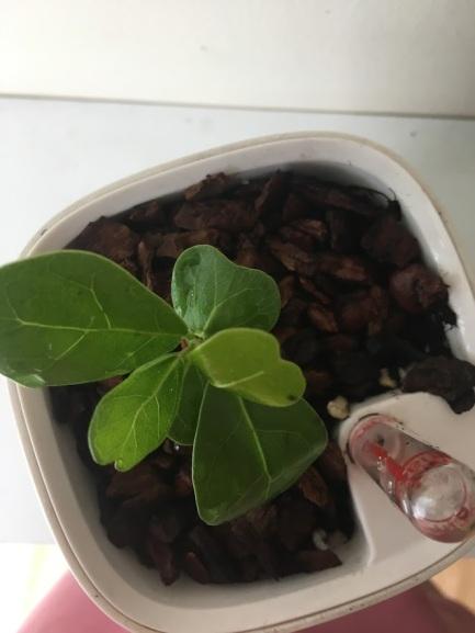 seedling growth progress